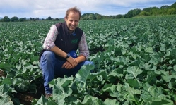 Brassicas to be focus of AHDB strategic centre in Scotland